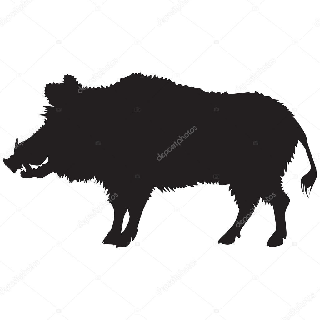 Silhouette of a wild boar