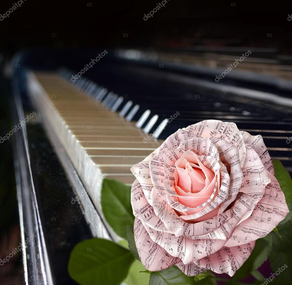Music Symbol Beautiful Pink Rose With Note On The Piano Keyboard