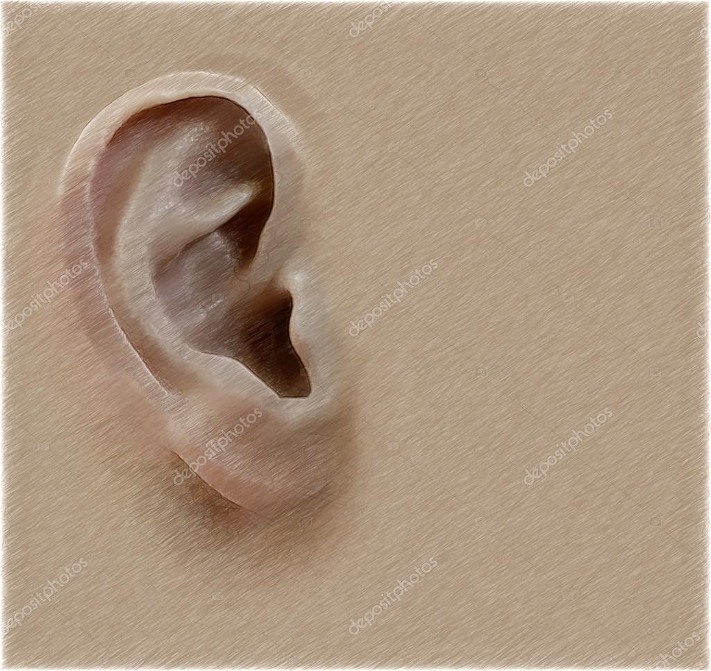 Human Ear Digital Illustration In Draw Sketch Style Background
