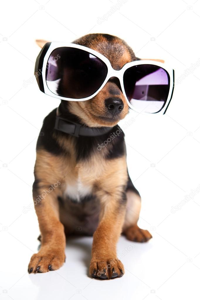 655a38d216691 chien avec lunettes de soleil — Photographie AndreyOrletskyy ©  53843945