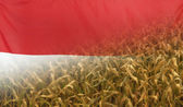 Photo Indonesia Nutrition Concept Corn field with fabric Flag