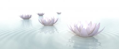 Zen lotus flowers in water with ripples on blurred background stock vector