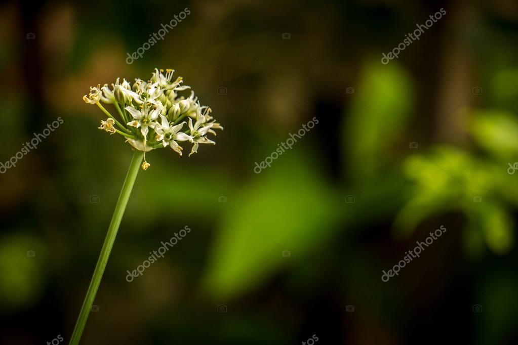 schöne weiße Blumen auf grünem Hintergrund bokeh — Stockfoto ...