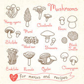 Fotografie Set drawings of mushrooms for design menus, recipes and packages product.