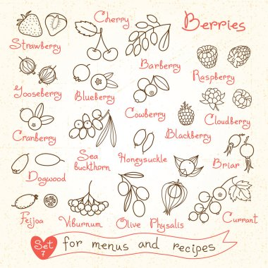 Set drawings of berries for design menus, recipes and packages product.