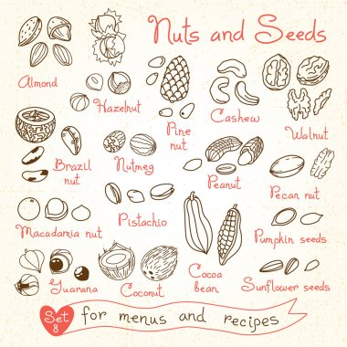 Set drawings of nuts and seeds for design menus, recipes, packages product.
