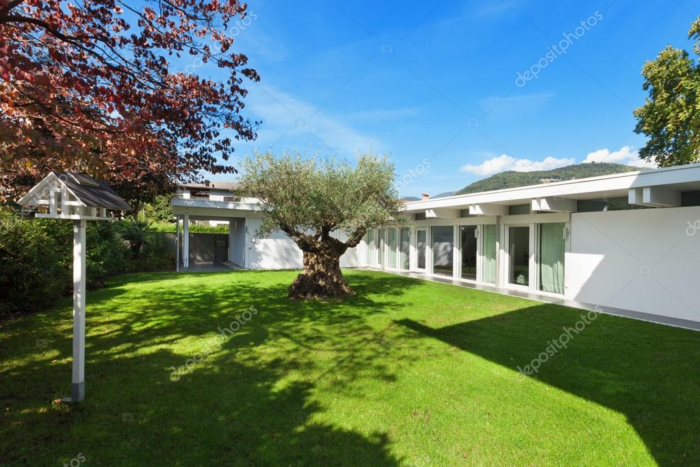 Architettura moderna, bellissimo giardino con vecchio ulivo \u2014 Foto di