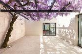 Fotografie Krásná veranda s wisteria