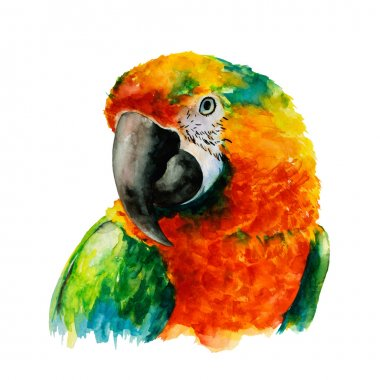 Parrot Head, Watercolor, Vector Illustration.