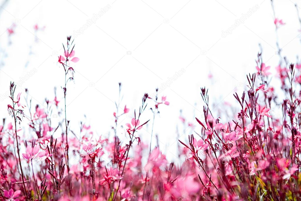 field with a pink flowers