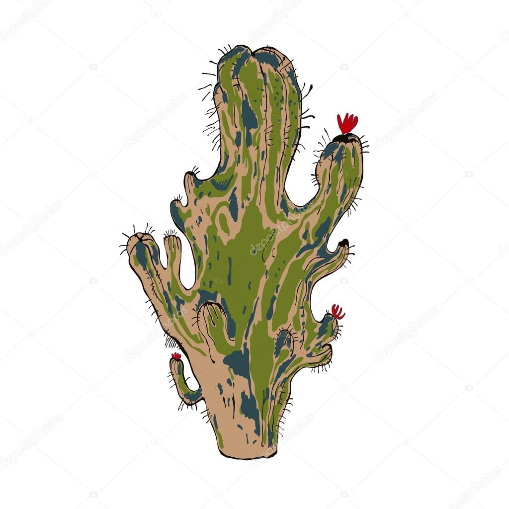 Vector illustration of cactus isolated object