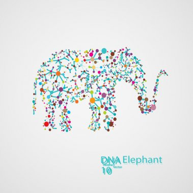 Molecular structure in the form of elephant
