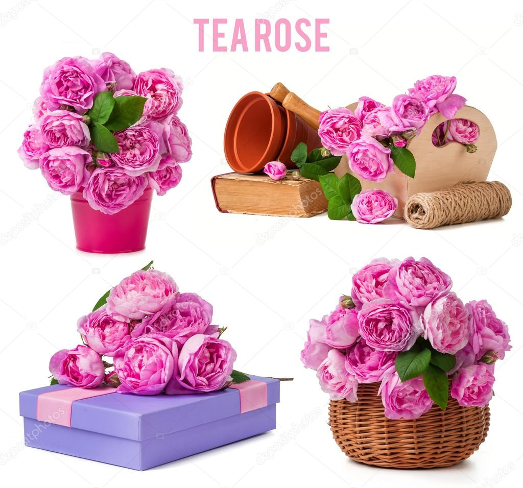 mix tea rose and garden tools isolated