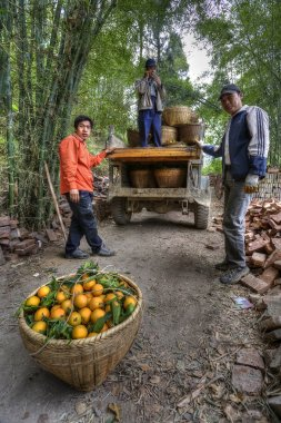 Chinese farmers unload baskets of oranges from an old truck.
