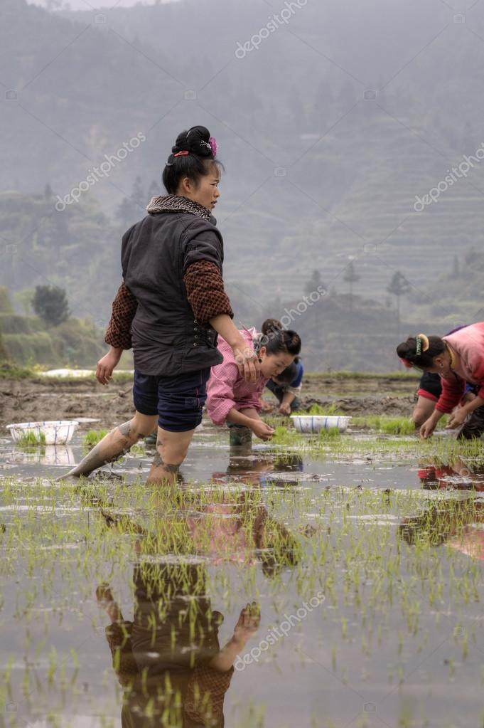 Asian girl farmers rice planting working, transplanting seedlings to ricefield.