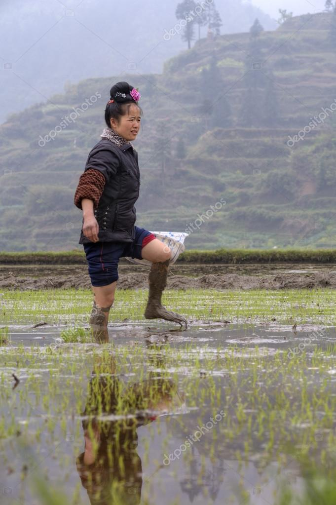 Asian farmer girl walks barefoot through mud of paddy fields.