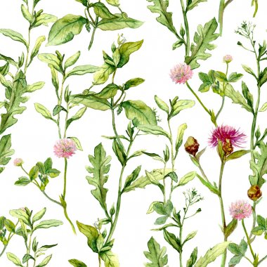 Pattern with meadow herbs. Seamless watercolor