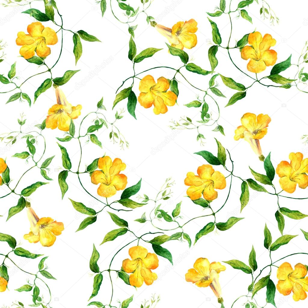 Yellow Flower Bindweed Repeating Floral Pattern Watercolor