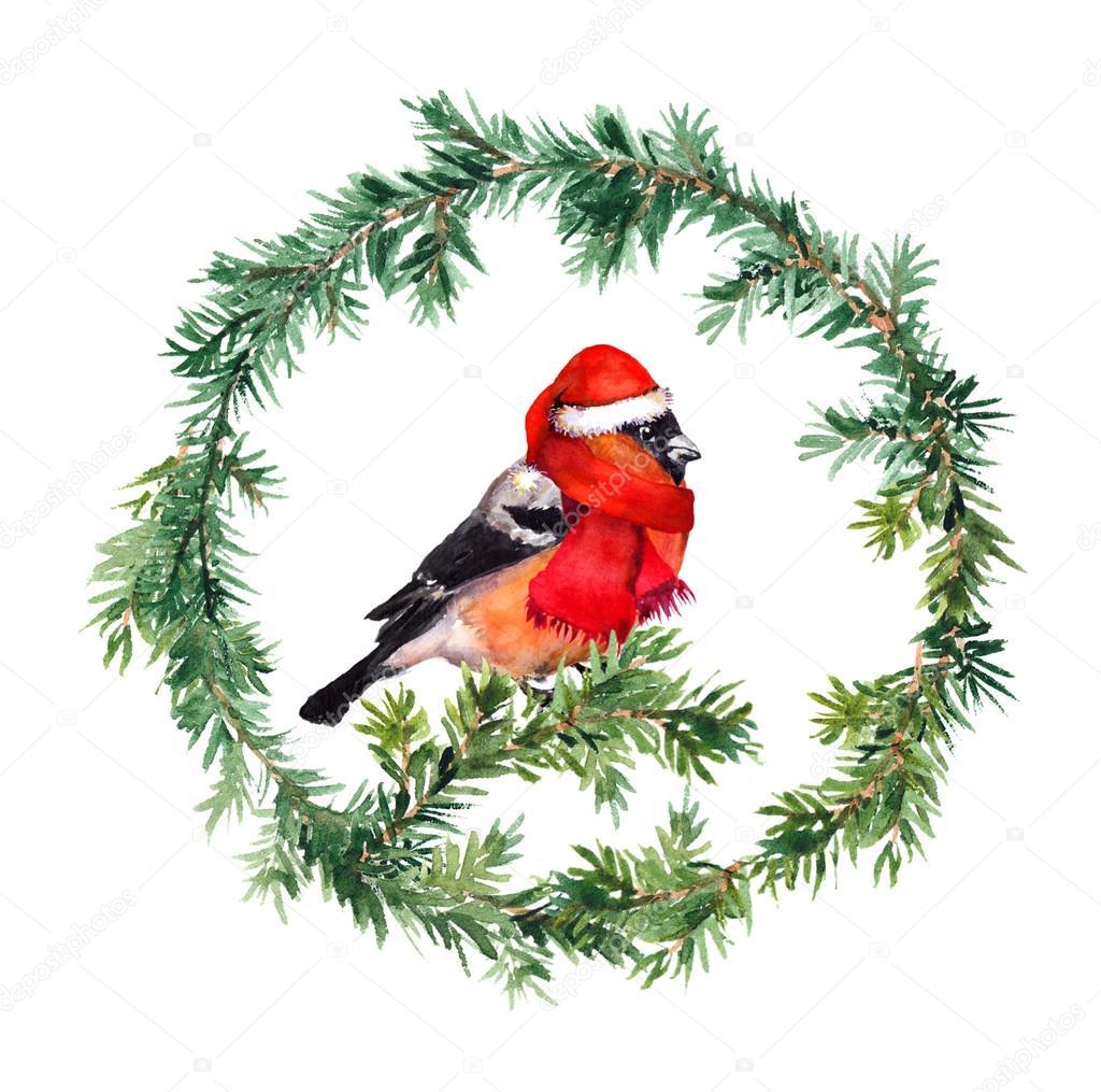 Guirnalda de año nuevo - abeto y Camachuelo del pájaro de sombrero ...