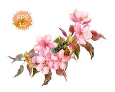 Blossom branch cherry, plum, peach, sakura with pink flowers. Watercolor