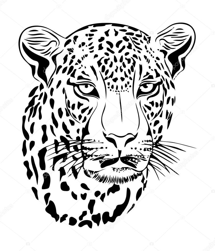Line Drawing Jaguar : Jaguar vector art — stock view adv