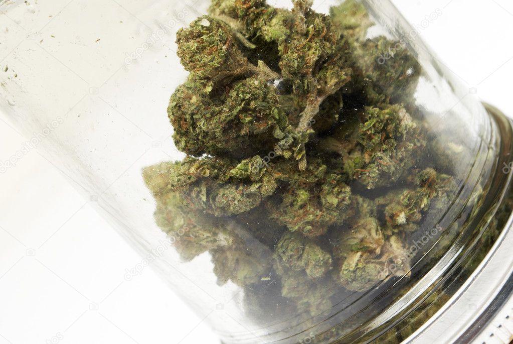 Marijuana or Cannabis Buds