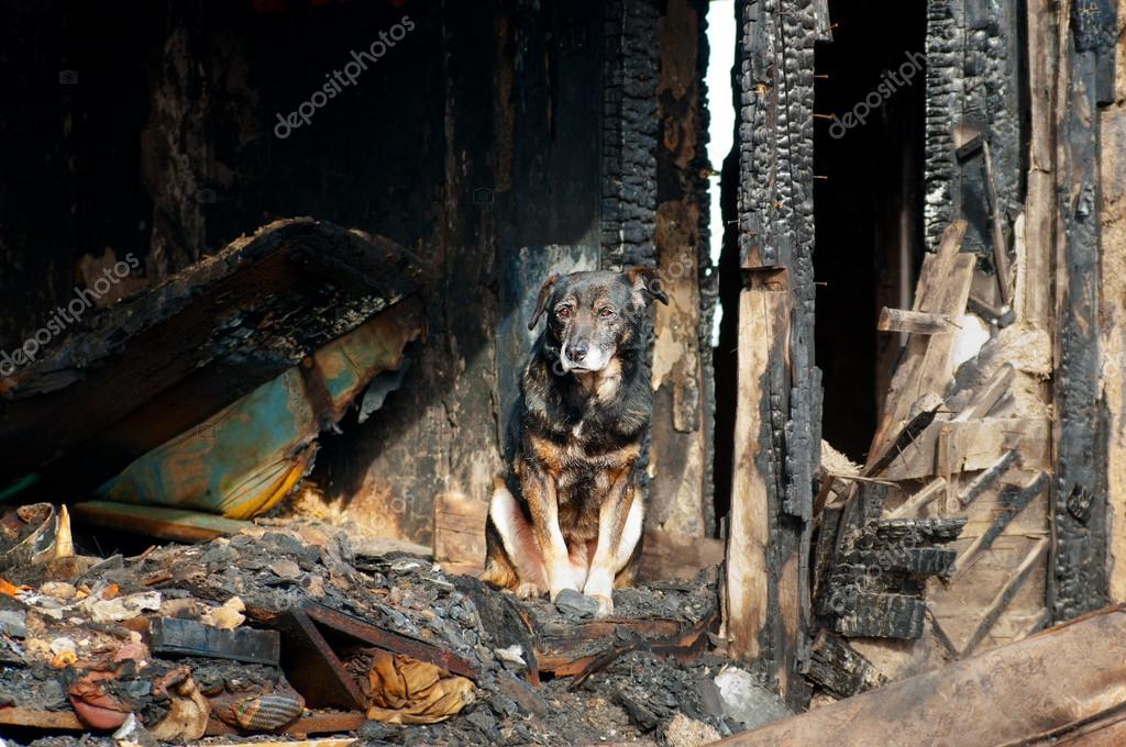 A dog in the house of the owners, burned by the fire house.