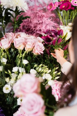 Cropped view of female florist taking celosia from rack of flowers with blurred roses on foreground stock vector