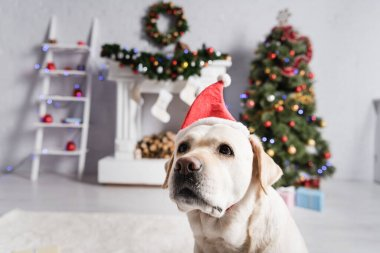 Labrador dog in santa hat, decorated christmas tree and fireplace on blurred background stock vector