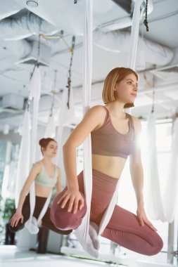 young sportive women practicing yoga pose in fly yoga hammocks, blurred background