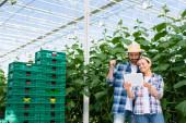 šťastní multietničtí zemědělci při pohledu na digitální tablet v blízkosti rostlin a plastových krabic ve skleníku