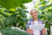 afro-amerikai mezőgazdasági termelő digitális tabletta közelében uborka növények elmosódott előtérben