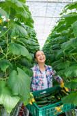 nevetés afro-amerikai farmer gazdaság doboz friss uborka, miközben a kamera