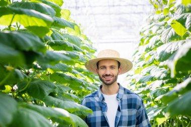 Saman şapkalı mutlu çiftçi, cam evindeki salatalık bitkilerinin yanında gülümsüyor.