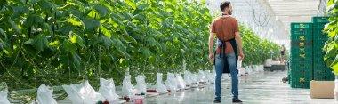 Back view of farmer standing near green plants in glasshouse, banner stock vector
