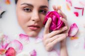 fiatal nő néz kamera és gazdaság rózsa fürdés közben a tej virágszirmok