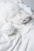 Hochwinkelaufnahme einer flauschigen Katze in der Nähe eines weißen Fadenknäuels auf weicher Decke