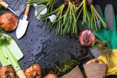 Garden tools and flower bulbs