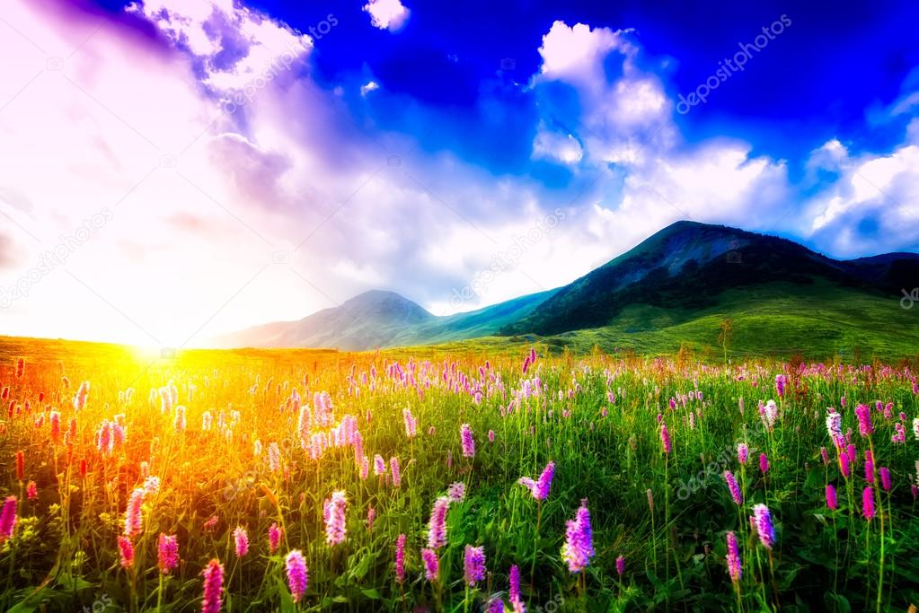 Sunset in a flowery meadow