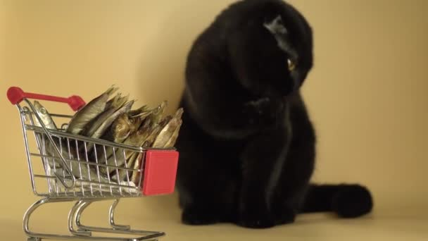 Černá kočka s nákupním košíkem plným ryb.