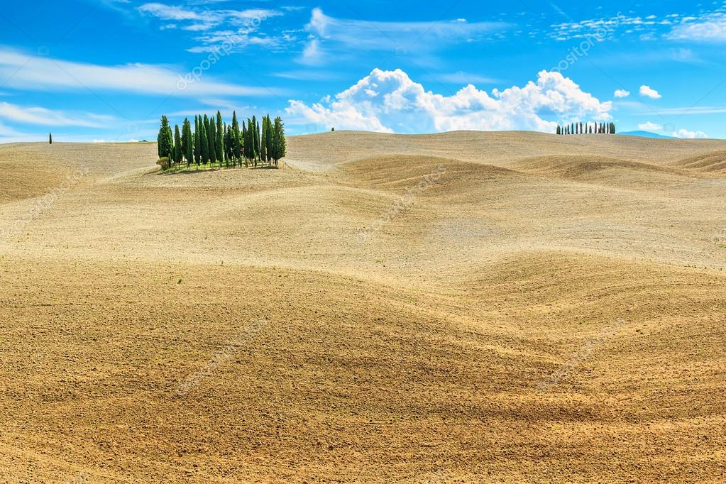 Beautiful Tuscany landscape with cypress trees near Siena,Italy,Europe