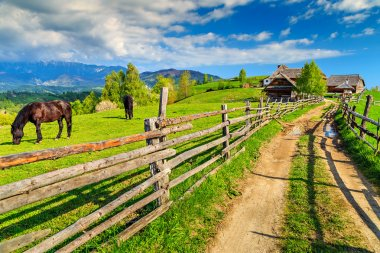 Grazing horses on the ranch,Bran,Transylvania,Romania,Europe