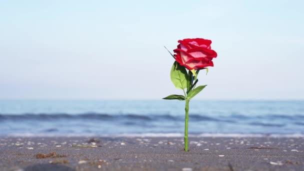 Élénk színű mesterséges rózsa homokban ellen elmosódott hullámok