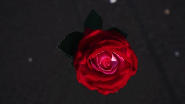 Piros mesterséges rózsa virág áll nedves homokban az óceán partján