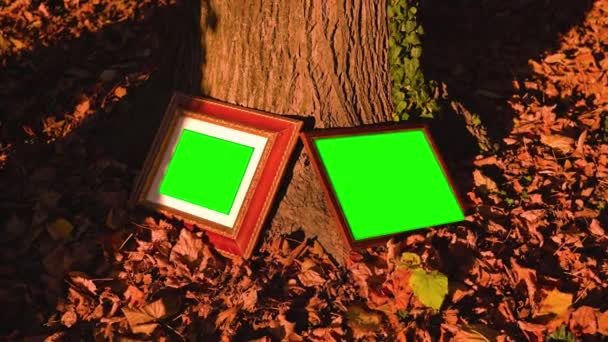 Wooden photo frames with chromakey leaning on tree trunk
