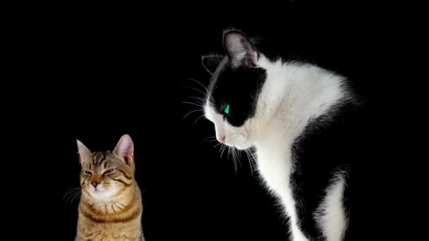 Two cats on a black background