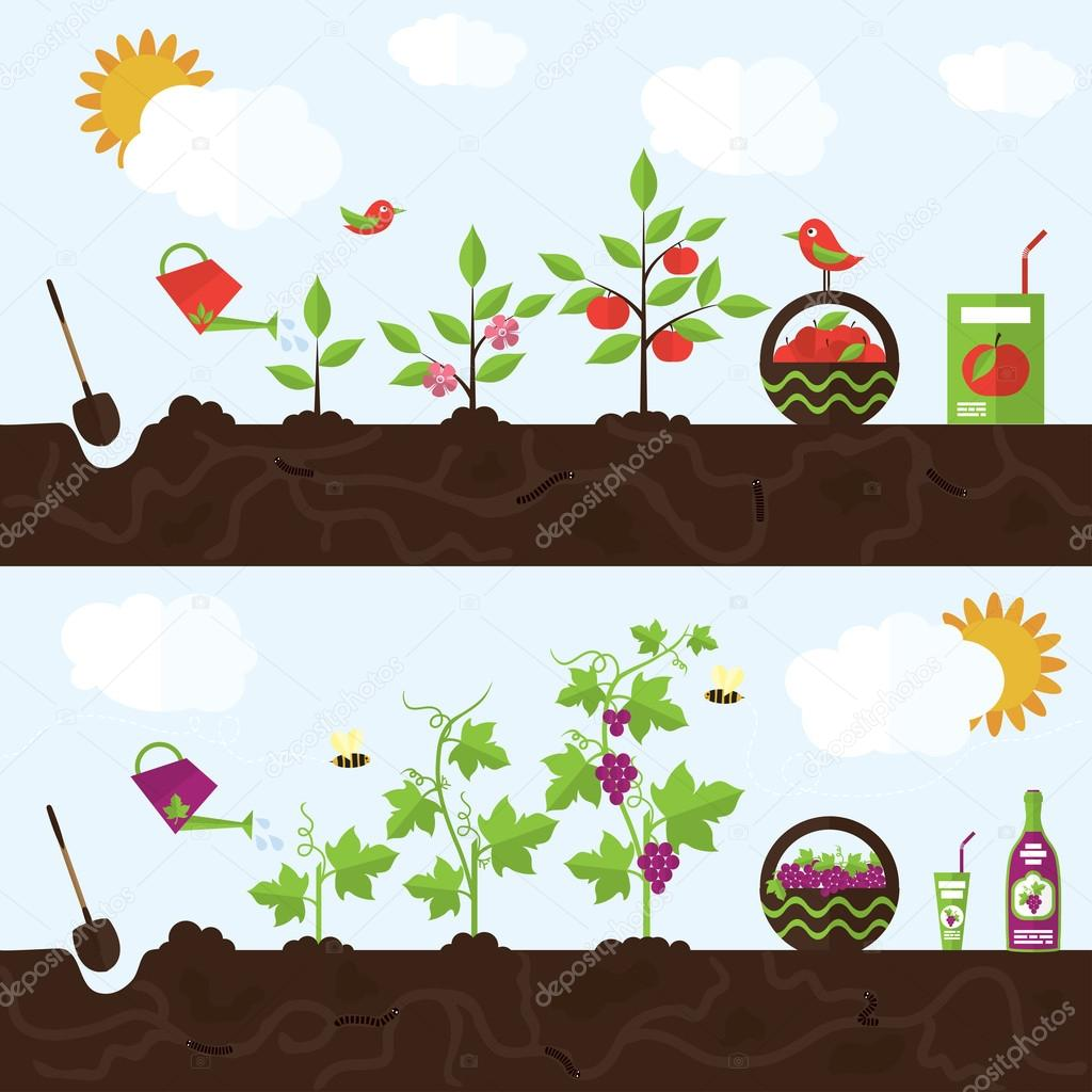 Vector garden illustration in flat style