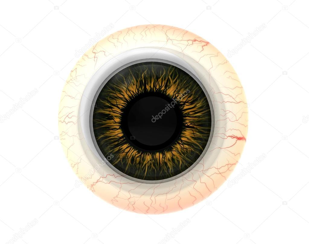 Anatomía de la disección de ojo humano — Fotos de Stock © oleg3DD ...