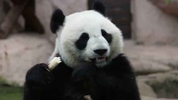 Panda medvěd sedí před budovou