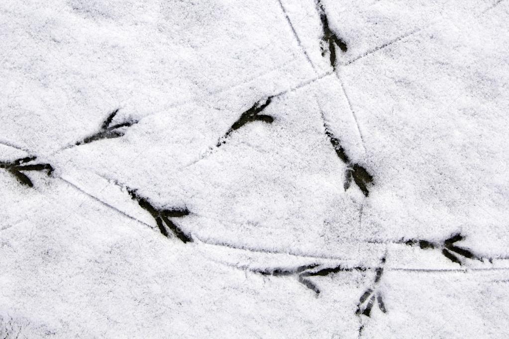 Следы птиц на снегу картинки с названиями